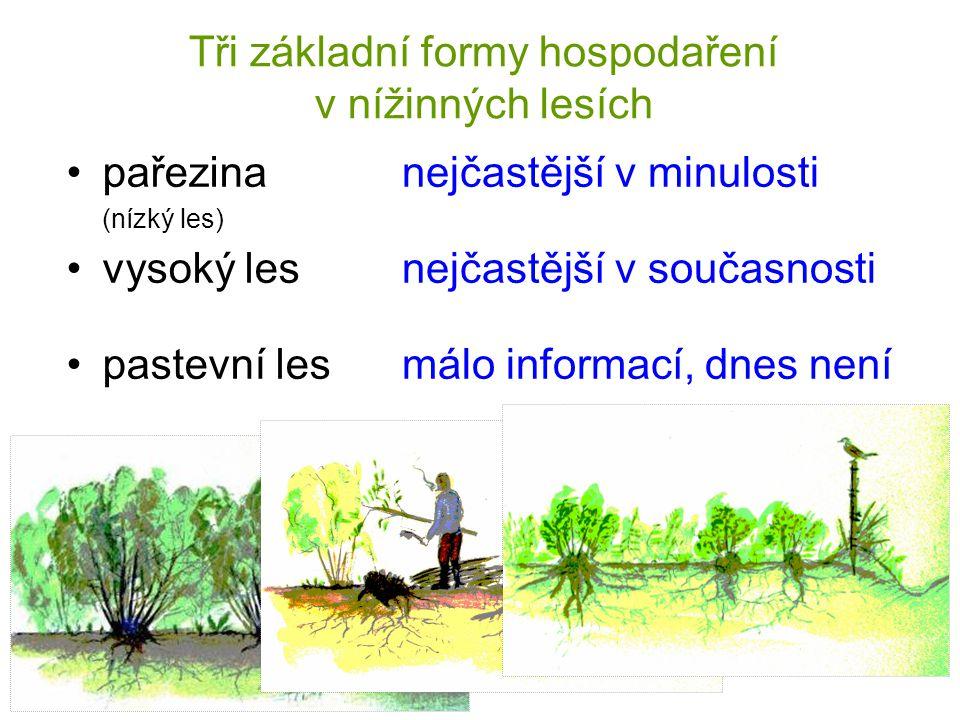 pařezina (nízký les) vysoký les pastevní les Tři základní formy hospodaření v nížinných lesích nejčastější v minulosti nejčastější v současnosti málo informací, dnes není