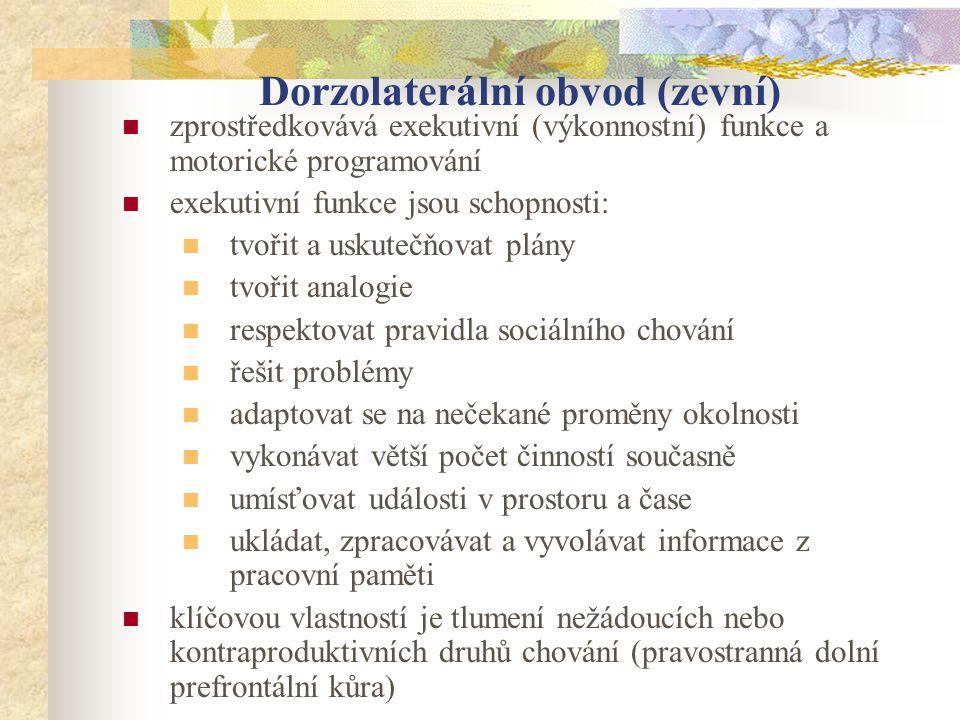Dorzolaterální obvod (zevní) zprostředkovává exekutivní (výkonnostní) funkce a motorické programování exekutivní funkce jsou schopnosti: tvořit a usku