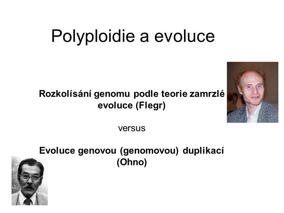 Polyploidie a evoluce Rozkolísání genomu podle teorie zamrzlé evoluce (Flegr) versus Evoluce genovou (genomovou) duplikací (Ohno)