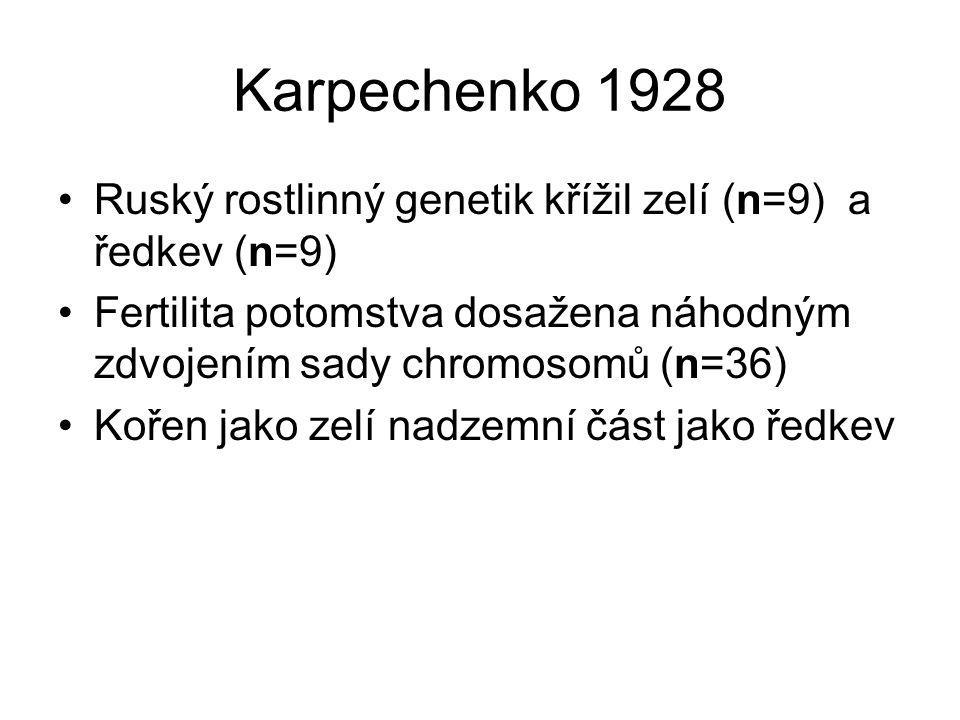 Karpechenko 1928 Ruský rostlinný genetik křížil zelí (n=9) a ředkev (n=9) Fertilita potomstva dosažena náhodným zdvojením sady chromosomů (n=36) Kořen jako zelí nadzemní část jako ředkev