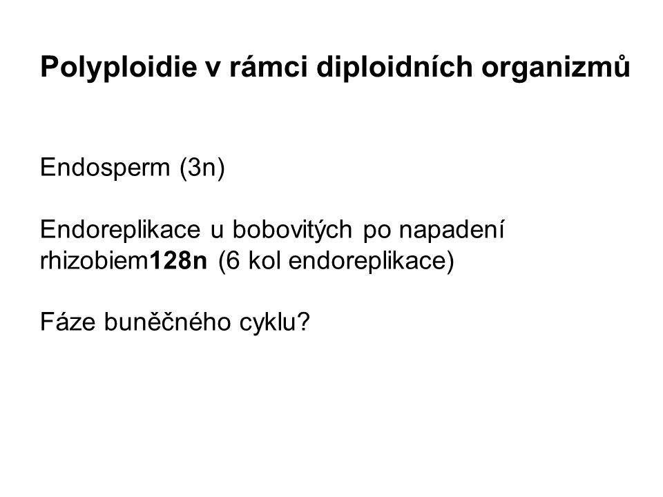 Endosperm (3n) Endoreplikace u bobovitých po napadení rhizobiem128n (6 kol endoreplikace) Fáze buněčného cyklu.