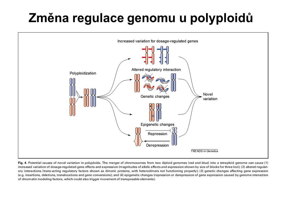 Změna regulace genomu u polyploidů