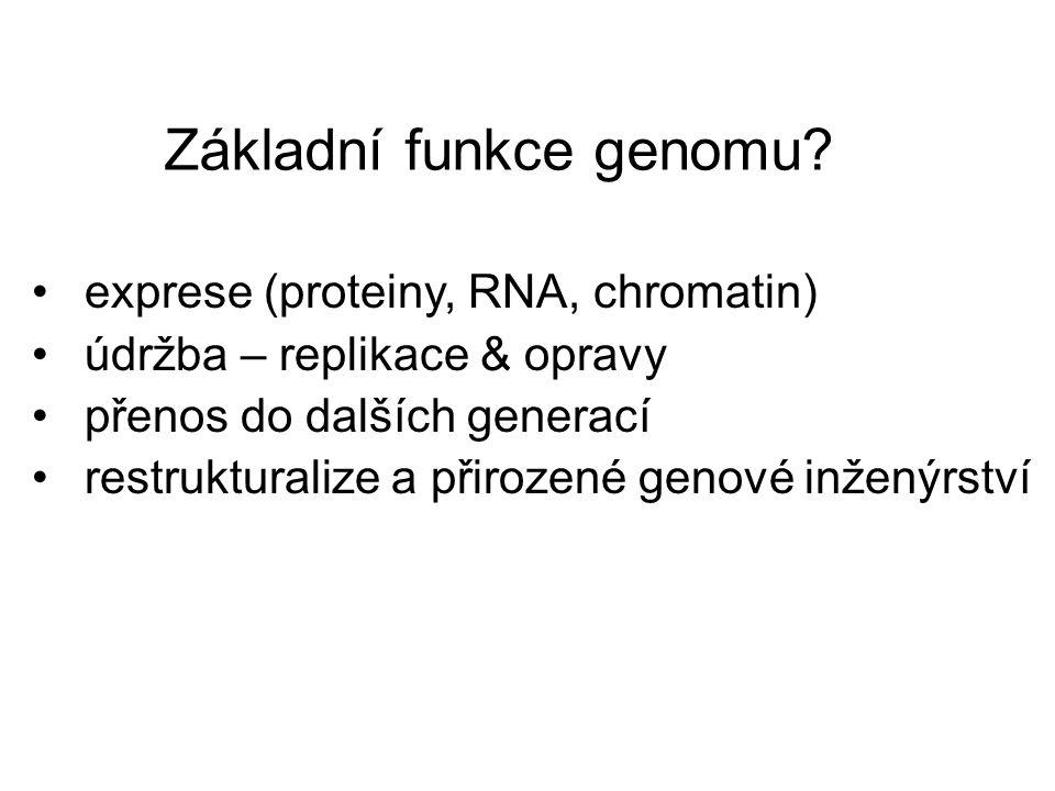 Základní funkce genomu? exprese (proteiny, RNA, chromatin) údržba – replikace & opravy přenos do dalších generací restrukturalize a přirozené genové i