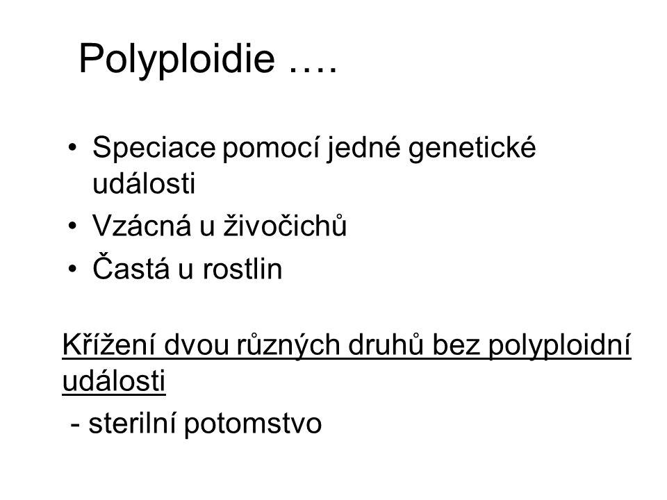 Polyploidie …. Speciace pomocí jedné genetické události Vzácná u živočichů Častá u rostlin Křížení dvou různých druhů bez polyploidní události - steri
