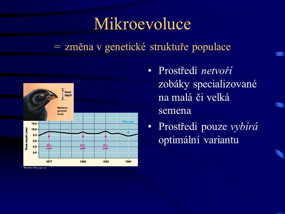 Mikroevoluce = změna v genetické struktuře populace Prostředí netvoří zobáky specializované na malá či velká semena Prostředí pouze vybírá optimální variantu
