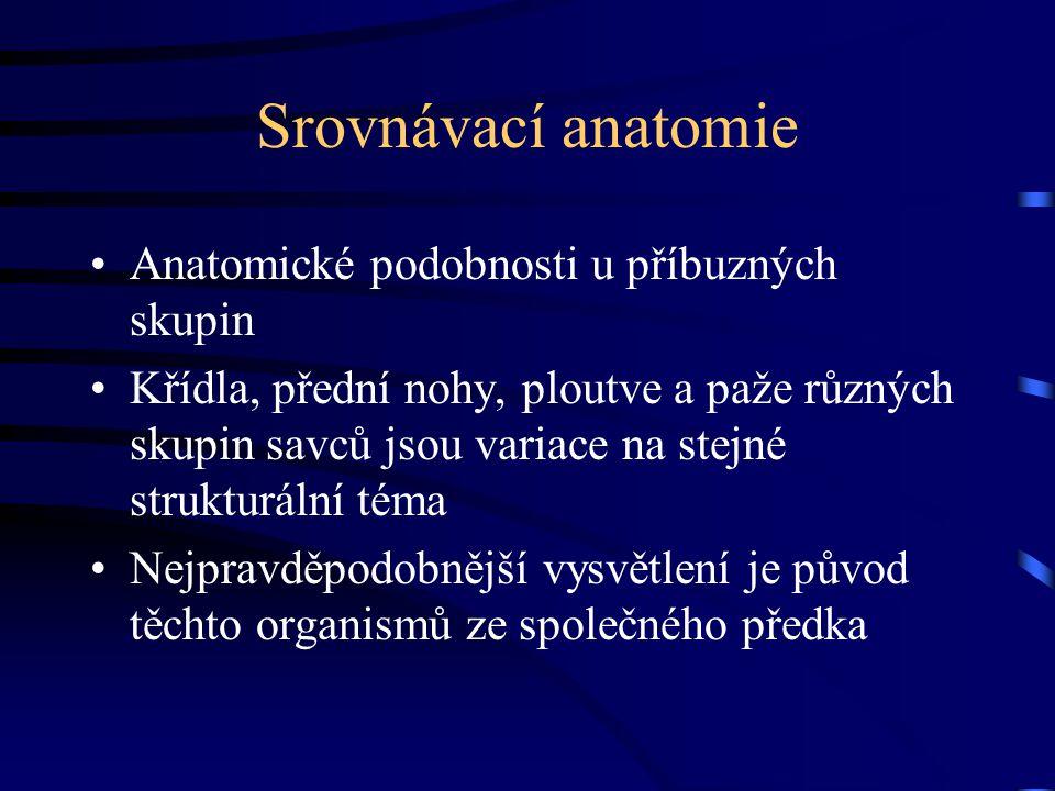 Srovnávací anatomie Anatomické podobnosti u příbuzných skupin Křídla, přední nohy, ploutve a paže různých skupin savců jsou variace na stejné strukturální téma Nejpravděpodobnější vysvětlení je původ těchto organismů ze společného předka