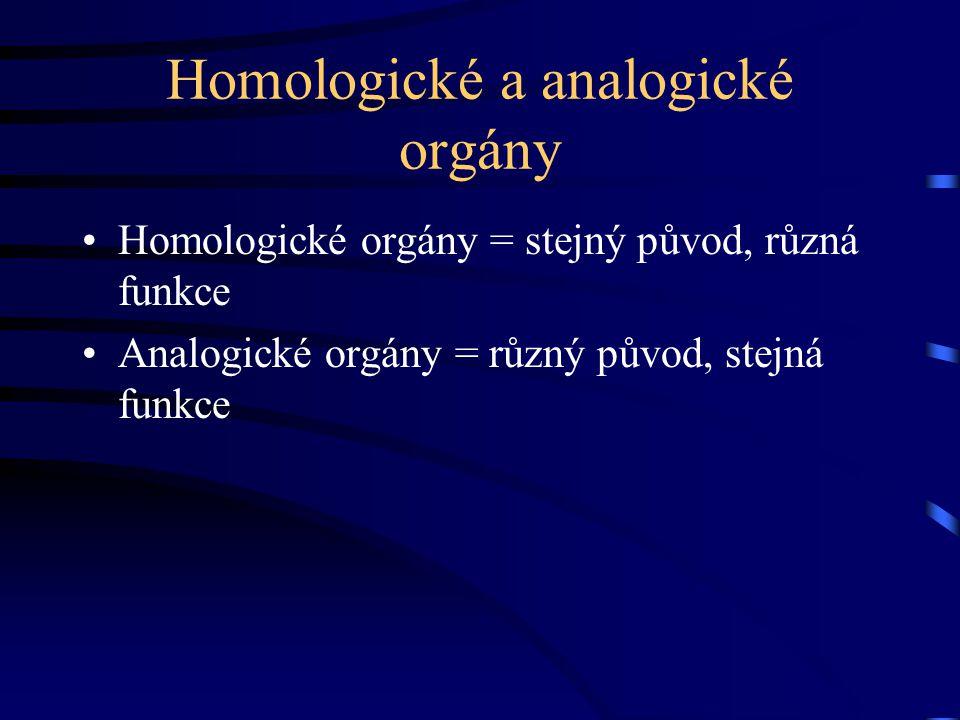 Homologické a analogické orgány Homologické orgány = stejný původ, různá funkce Analogické orgány = různý původ, stejná funkce