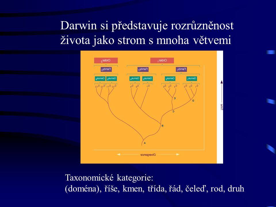 Darwin si představuje rozrůzněnost života jako strom s mnoha větvemi Taxonomické kategorie: (doména), říše, kmen, třída, řád, čeleď, rod, druh