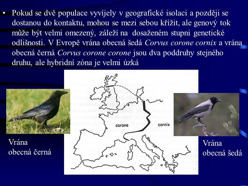 Pokud se dvě populace vyvíjely v geografické isolaci a později se dostanou do kontaktu, mohou se mezi sebou křížit, ale genový tok může být velmi omez