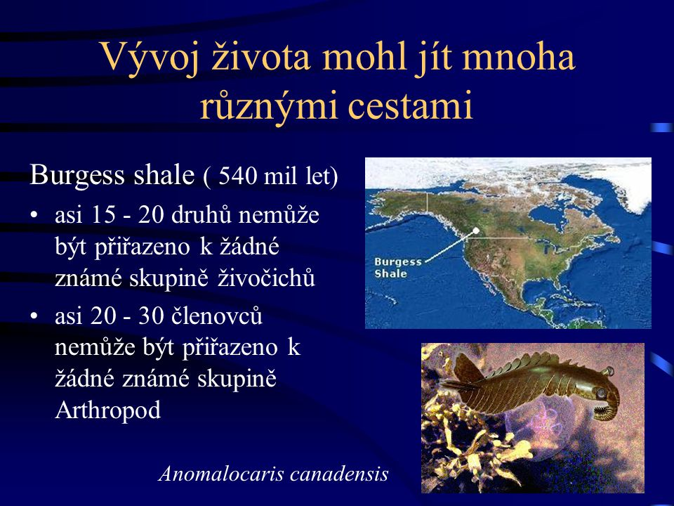 Vývoj života mohl jít mnoha různými cestami Burgess shale ( 540 mil let) asi 15 - 20 druhů nemůže být přiřazeno k žádné známé skupině živočichů asi 20 - 30 členovců nemůže být přiřazeno k žádné známé skupině Arthropod Anomalocaris canadensis