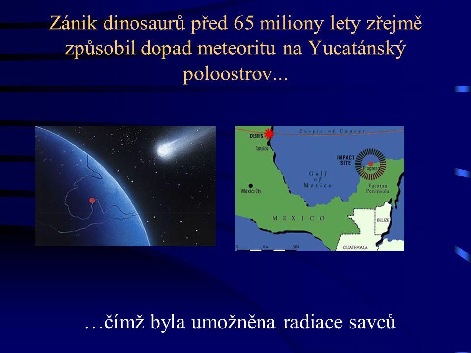 Zánik dinosaurů před 65 miliony lety zřejmě způsobil dopad meteoritu na Yucatánský poloostrov... …čímž byla umožněna radiace savců