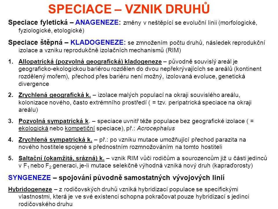 SPECIACE – VZNIK DRUHŮ Speciace fyletická – ANAGENEZE: změny v neštěpící se evoluční linii (morfologické, fyziologické, etologické) Speciace štěpná –