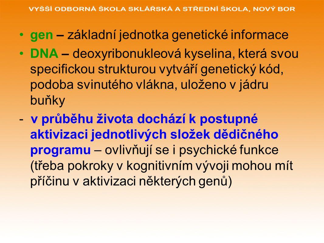 gen – základní jednotka genetické informace DNA – deoxyribonukleová kyselina, která svou specifickou strukturou vytváří genetický kód, podoba svinutéh
