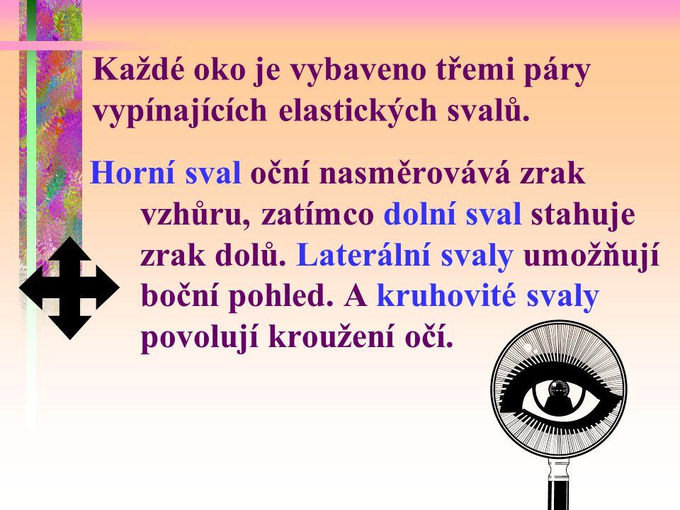 Každé oko je vybaveno třemi páry vypínajících elastických svalů.