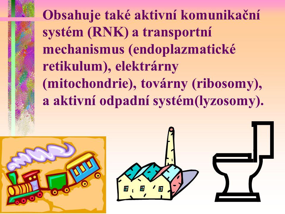 Obsahuje také aktivní komunikační systém (RNK) a transportní mechanismus (endoplazmatické retikulum), elektrárny (mitochondrie), továrny (ribosomy), a aktivní odpadní systém(lyzosomy).