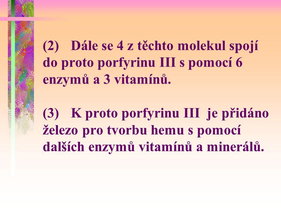(2) Dále se 4 z těchto molekul spojí do proto porfyrinu III s pomocí 6 enzymů a 3 vitamínů.
