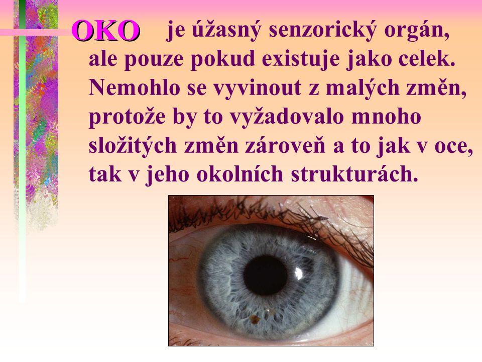 OKO je úžasný senzorický orgán, ale pouze pokud existuje jako celek.