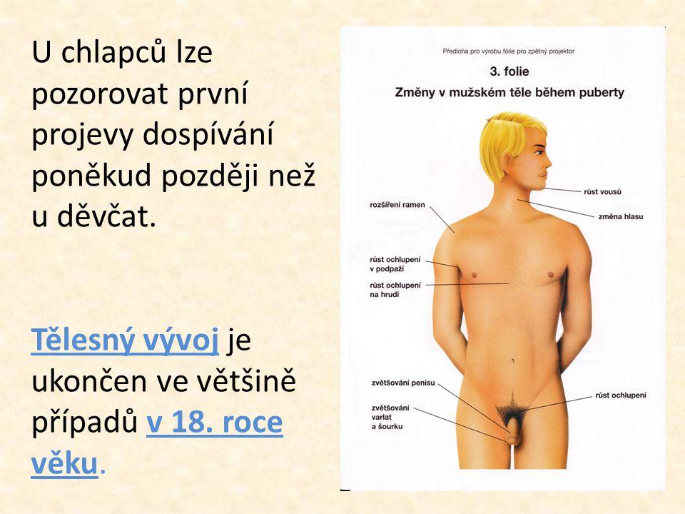 Změny v mužském těle: -růst vousů -změna hlasu -rozšíření ramen -růst ochlupení v podpaží -růst ochlupení na hrudi -zvětšování penisu -růst ochlupení nad penisem -zvětšování varlat a šourku