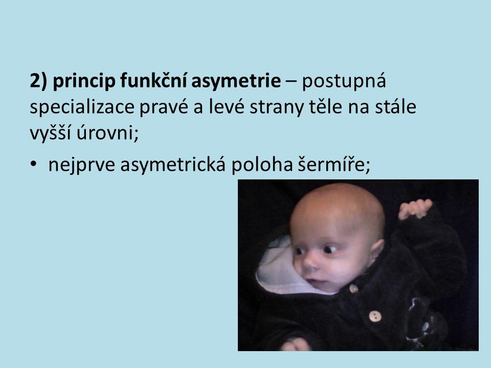 2) princip funkční asymetrie – postupná specializace pravé a levé strany těle na stále vyšší úrovni; nejprve asymetrická poloha šermíře;