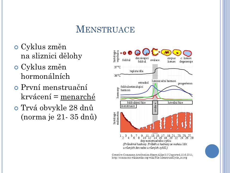 F ÁZE MENSTRUAČNÍHO CYKLU Menstruační fáze: 1.– 5.