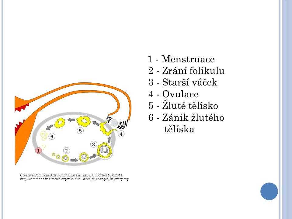 H YGIENA V OBDOBÍ MENSTRUACE Zvlášť důležitá menstruační tekutinu rozkládají bakterie, což způsobuje zápach, nebezpečí infekce silnější vylučování potu pleť a vlasy se více mastí Nutné používání hygienických pomůcek: Menstruační vložky Tampony