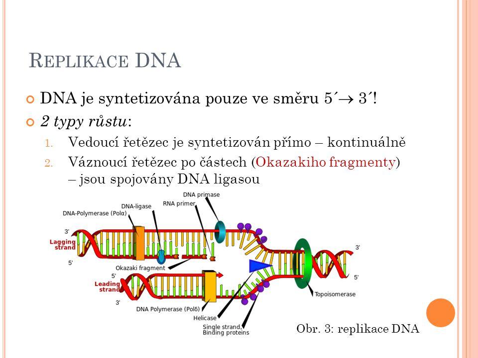 R EPLIKACE DNA DNA je syntetizována pouze ve směru 5´  3´! 2 typy růstu : 1. Vedoucí řetězec je syntetizován přímo – kontinuálně 2. Váznoucí řetězec