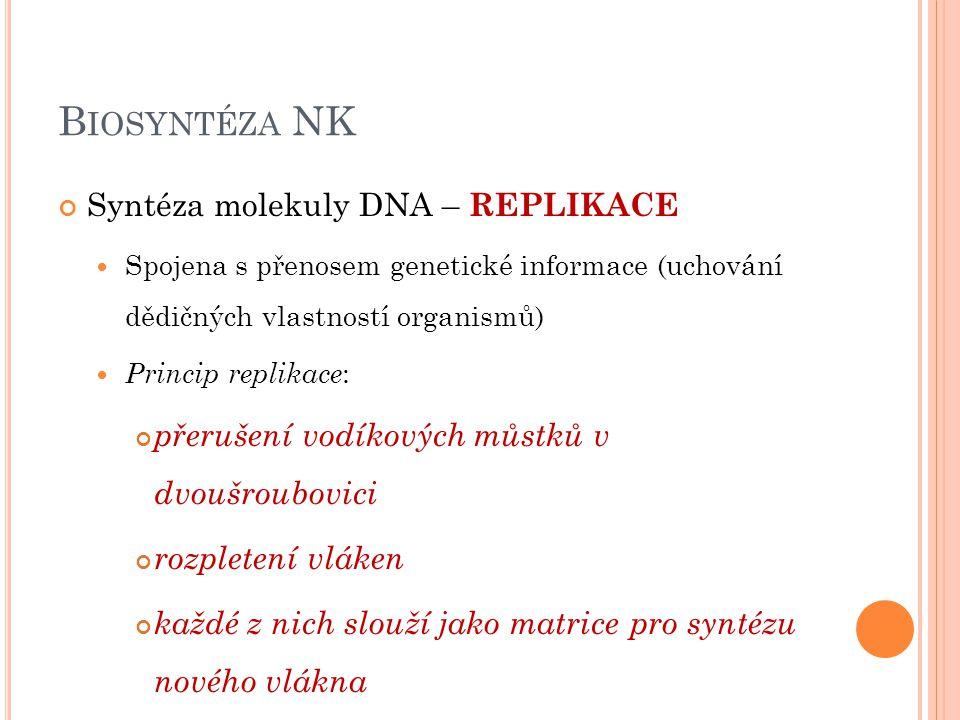 B IOSYNTÉZA NK Syntéza molekuly DNA – REPLIKACE Spojena s přenosem genetické informace (uchování dědičných vlastností organismů) Princip replikace : p