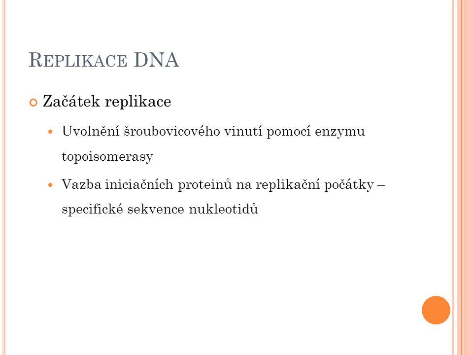 R EPLIKACE DNA Začátek replikace Uvolnění šroubovicového vinutí pomocí enzymu topoisomerasy Vazba iniciačních proteinů na replikační počátky – specifi