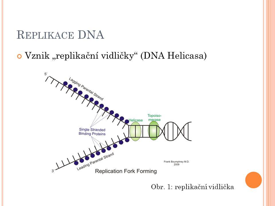 R EPLIKACE DNA RNA primasa – nasyntetizuje krátký úsek RNA – PRIMER K němu jsou pak pomocí DNA polymerasy připojovány nukleotidy ve stanovením pořadí Obr.