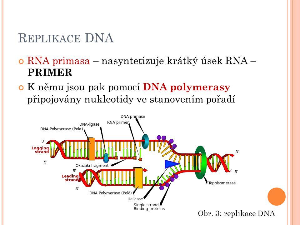 R EPLIKACE DNA RNA primasa – nasyntetizuje krátký úsek RNA – PRIMER K němu jsou pak pomocí DNA polymerasy připojovány nukleotidy ve stanovením pořadí