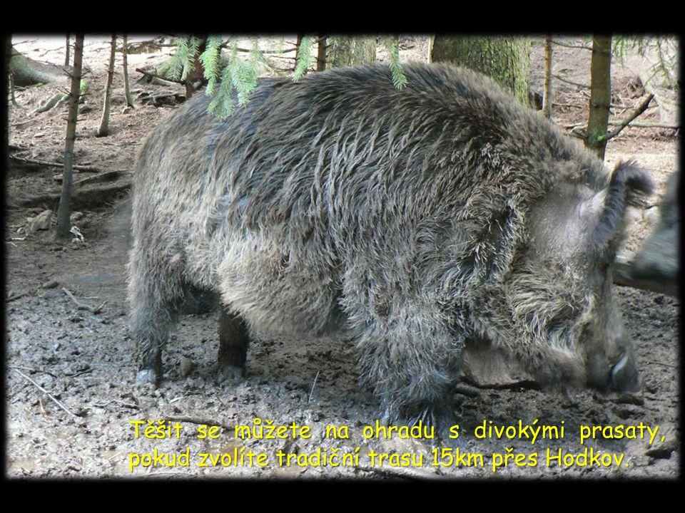 Ať již máte raději romantiku ranní mlhy, nebo teplé poledne, rozhodně nezapomeňte ve svůj čas přijít 7. května na start pochodu Ze Zbraslavic do Zruče