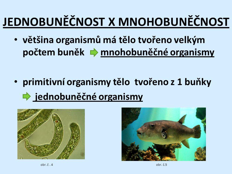 JEDNOBUNĚČNOST X MNOHOBUNĚČNOST většina organismů má tělo tvořeno velkým počtem buněk mnohobuněčné organismy primitivní organismy tělo tvořeno z 1 buňky jednobuněčné organismy obr.