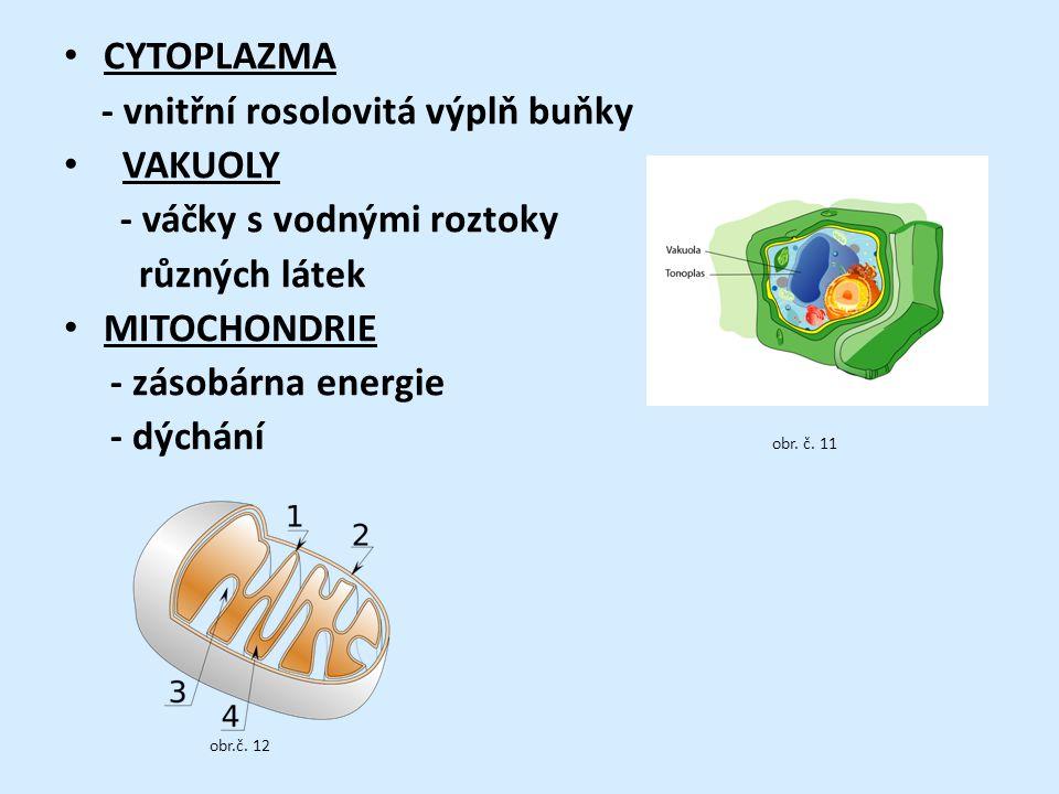 CYTOPLAZMA - vnitřní rosolovitá výplň buňky VAKUOLY - váčky s vodnými roztoky různých látek MITOCHONDRIE - zásobárna energie - dýchání obr.