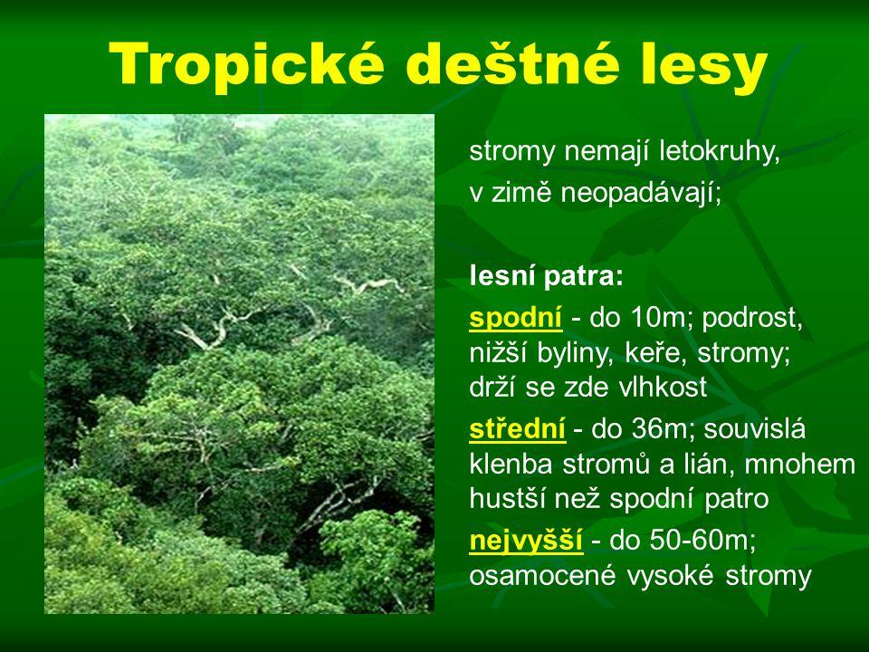 stromy nemají letokruhy, v zimě neopadávají; lesní patra: spodní - do 10m; podrost, nižší byliny, keře, stromy; drží se zde vlhkost střední - do 36m; souvislá klenba stromů a lián, mnohem hustší než spodní patro nejvyšší - do 50-60m; osamocené vysoké stromy Tropické deštné lesy