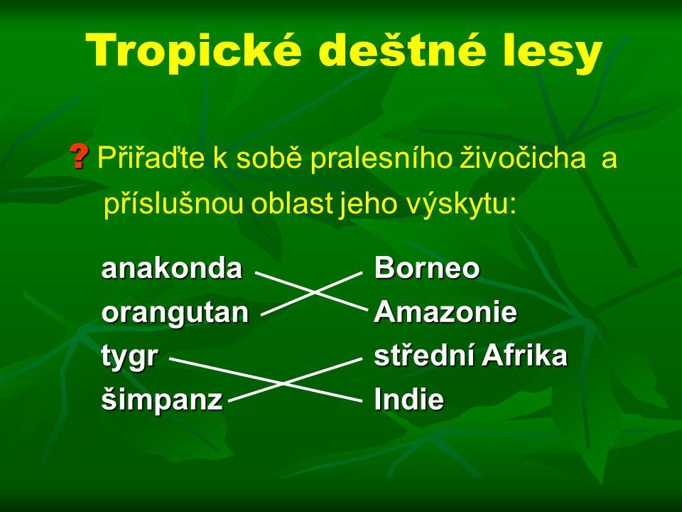anakonda Borneo orangutan Amazonie tygr střední Afrika šimpanz Indie .