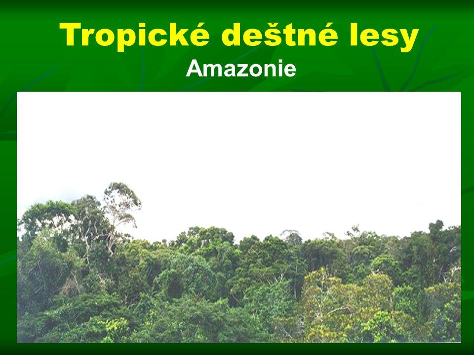 Amazonie Tropické deštné lesy