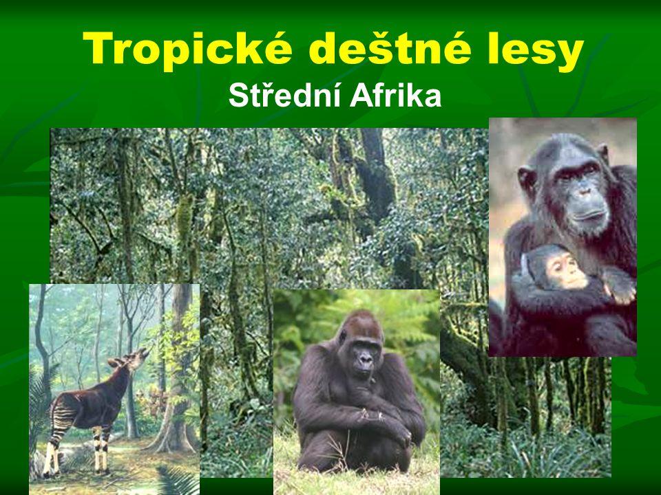 Střední Afrika Tropické deštné lesy