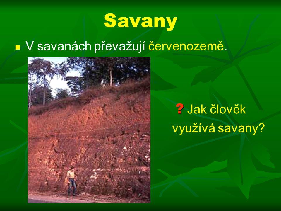 Savany V savanách převažují červenozemě. ? ? Jak člověk využívá savany?