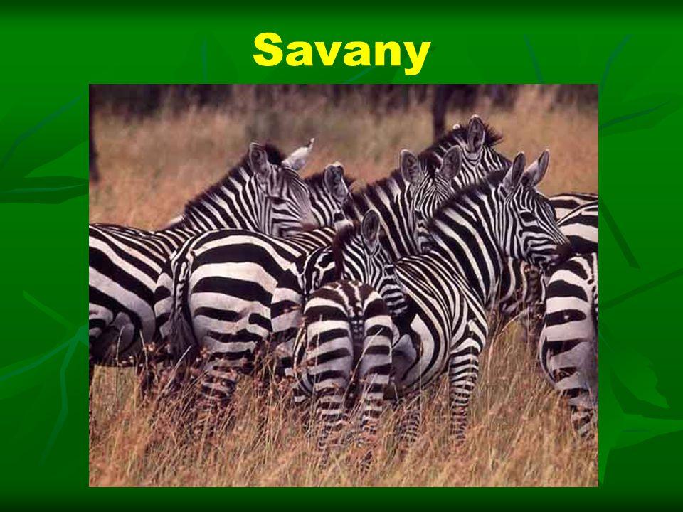 Savany
