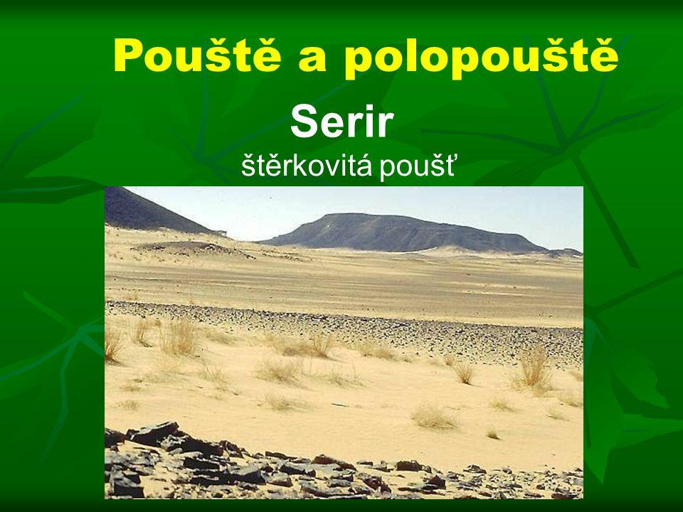 Pouště a polopouště Serir štěrkovitá poušť