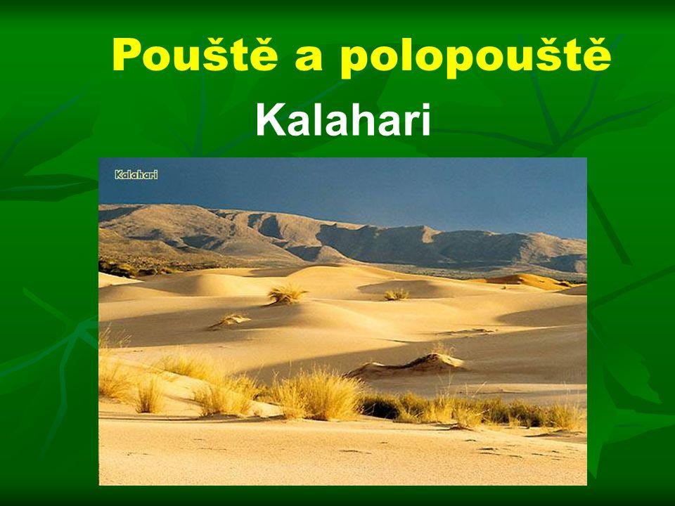 Pouště a polopouště Kalahari
