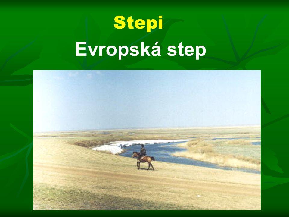 Stepi Evropská step