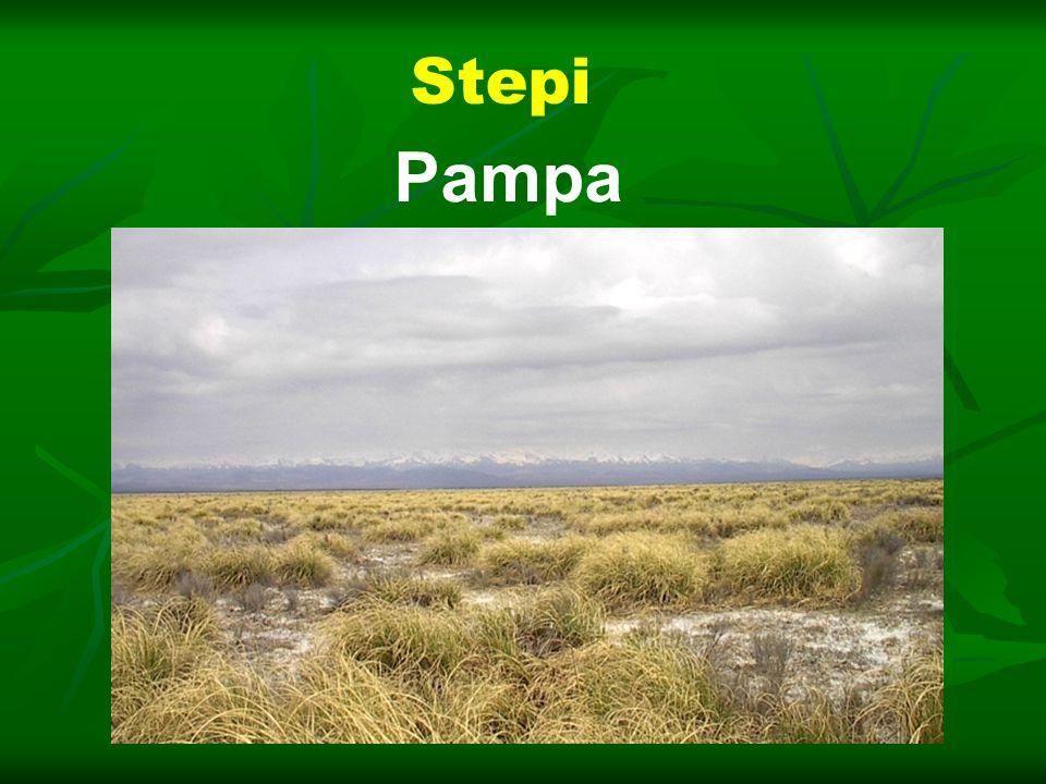 Stepi Pampa