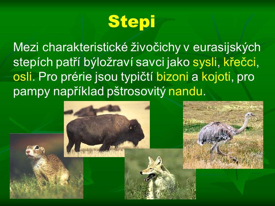 Stepi Mezi charakteristické živočichy v eurasijských stepích patří býložraví savci jako sysli, křečci, osli.