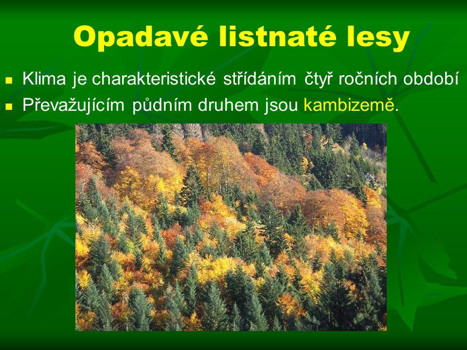 Opadavé listnaté lesy Klima je charakteristické střídáním čtyř ročních období Převažujícím půdním druhem jsou kambizemě.