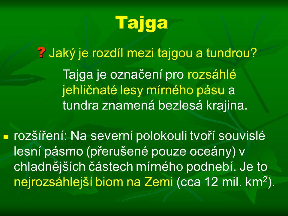 Tajga rozšíření: Na severní polokouli tvoří souvislé lesní pásmo (přerušené pouze oceány) v chladnějších částech mírného podnebí.