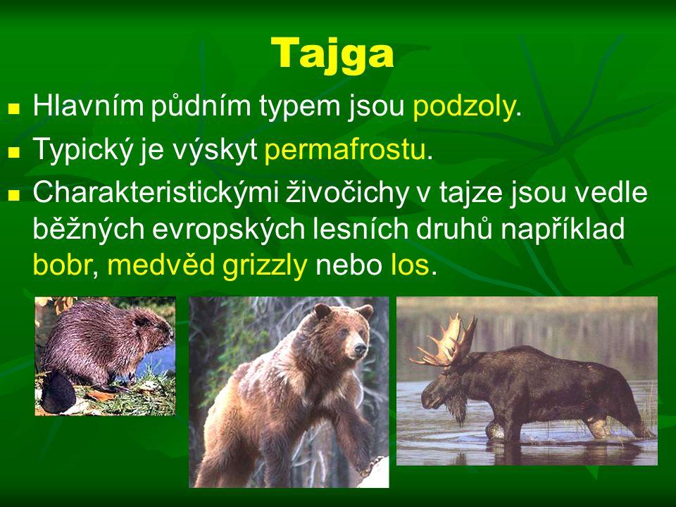 Tajga Hlavním půdním typem jsou podzoly.Typický je výskyt permafrostu.