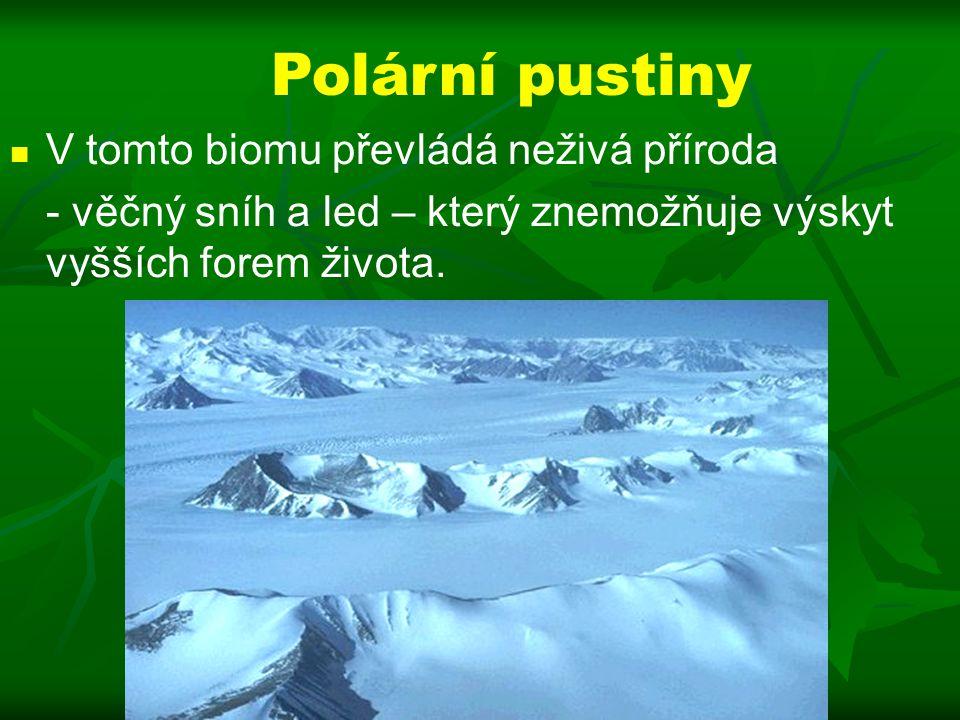 Polární pustiny V tomto biomu převládá neživá příroda - věčný sníh a led – který znemožňuje výskyt vyšších forem života.