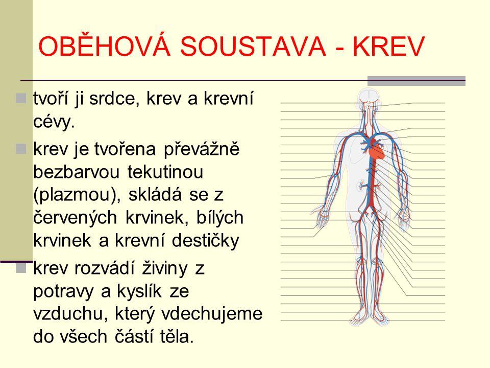 OBĚHOVÁ SOUSTAVA - KREV tvoří ji srdce, krev a krevní cévy. krev je tvořena převážně bezbarvou tekutinou (plazmou), skládá se z červených krvinek, bíl