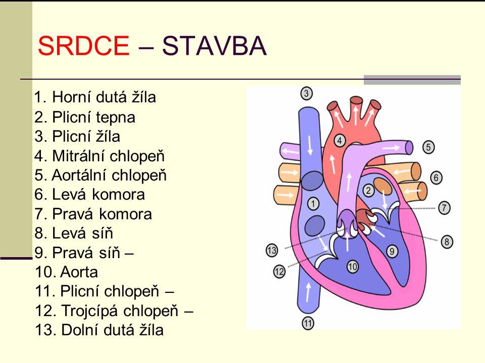 SRDCE – STAVBA 1. Horní dutá žíla 2. Plicní tepna 3. Plicní žíla 4. Mitrální chlopeň 5. Aortální chlopeň 6. Levá komora 7. Pravá komora 8. Levá síň 9.